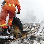 ambulance-coordination-secours